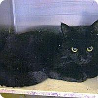 Adopt A Pet :: Buster & Bruster - Chesapeake, VA