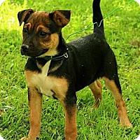 Adopt A Pet :: Madison - Staunton, VA
