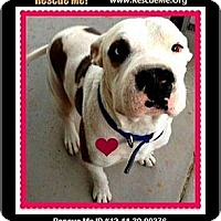 Adopt A Pet :: Jackson (courtesy) - Scottsdale, AZ