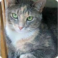 Adopt A Pet :: Pretty Girl - Plainville, MA