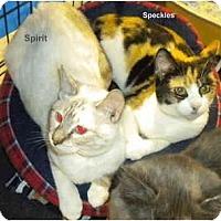 Adopt A Pet :: Spirit - Jacksonville, FL