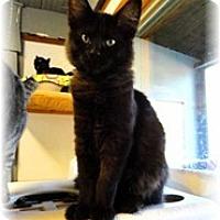 Adopt A Pet :: Kirk - Shelton, WA