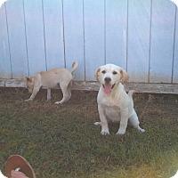 Adopt A Pet :: Coco` - Danbury, CT