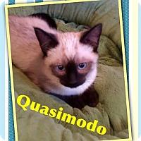 Adopt A Pet :: Quasimodo - McDonough, GA