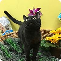 Adopt A Pet :: Rikki - Decatur, AL