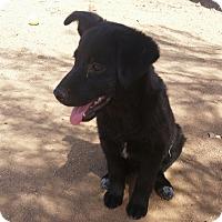 Adopt A Pet :: Zenda - Tucson, AZ