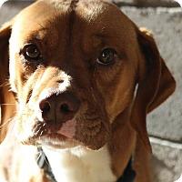 Adopt A Pet :: Jocko - Pompton Lakes, NJ