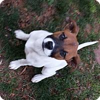 Adopt A Pet :: Dottie - Marion, NC