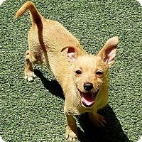 Adopt A Pet :: Cashew - Ft. Lauderdale, FL