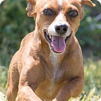 Adopt A Pet :: Josh - Patterson, CA