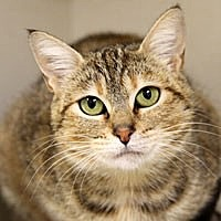 Adopt A Pet :: Leslie - Pacific Grove, CA