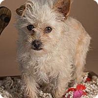 Adopt A Pet :: Jacobi - Phoenix, AZ