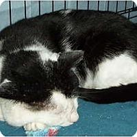 Adopt A Pet :: Joker - Westfield, MA