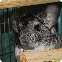 Adopt A Pet :: Elliot - Titusville, FL