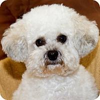 Adopt A Pet :: Lucy - La Costa, CA