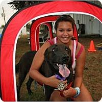 Adopt A Pet :: Judge - Houston, TX