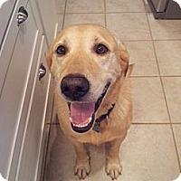 Adopt A Pet :: Zach - Danbury, CT