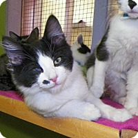 Adopt A Pet :: Paco - Dover, OH