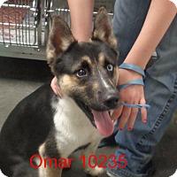 Adopt A Pet :: Omar - baltimore, MD