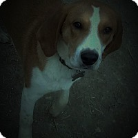Adopt A Pet :: Mateo - richmond, VA