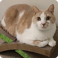 Adopt A Pet :: Rascal - Medina, OH