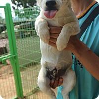 Adopt A Pet :: Junior - Oakton, VA
