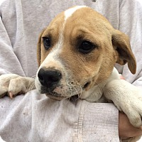 Adopt A Pet :: Parker-pending adoption - Manchester, CT