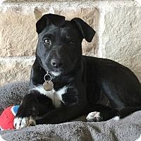 Adopt A Pet :: Camille - Flower Mound, TX