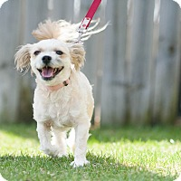 Adopt A Pet :: Itty Bitty - Red Wing, MN
