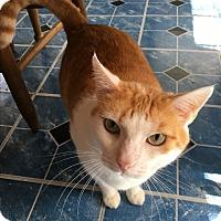 Adopt A Pet :: Simon - Parkton, NC