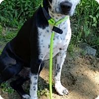 Adopt A Pet :: Gunther - Irmo, SC