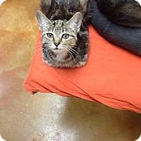 Adopt A Pet :: Demi - Lake Charles, LA