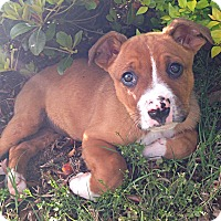 Adopt A Pet :: Dempsey - Somers, CT