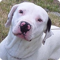 Adopt A Pet :: Cruz - Chewelah, WA
