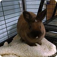 Adopt A Pet :: Cinabun - Monrovia, CA