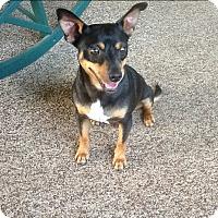 Adopt A Pet :: Kaiser - Homewood, AL