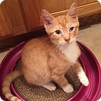 Adopt A Pet :: Iolas - East Hanover, NJ