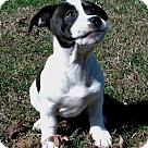 Adopt A Pet :: PUPPY JOURNEY