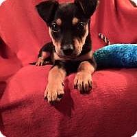 Adopt A Pet :: Einstein - Marlton, NJ