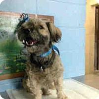 Adopt A Pet :: URGENT ON 5/26  San Bernardino - San Bernardino, CA