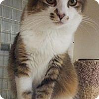 Adopt A Pet :: Caitlin - Chandler, AZ
