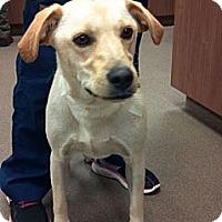 Adopt A Pet :: Sophie - Cumming, GA