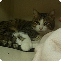 Adopt A Pet :: Brock Evan - Hamburg, NY