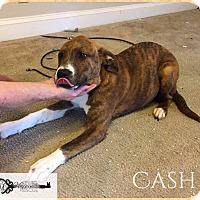 Adopt A Pet :: Cash - DeForest, WI