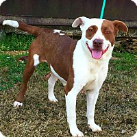 Adopt A Pet :: Sailor - Demopolis, AL