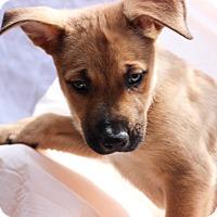 Adopt A Pet :: Sandy - Elgin, IL