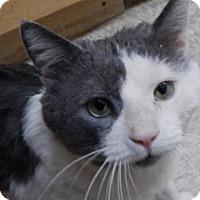 Adopt A Pet :: Ed - Herndon, VA
