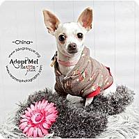 Adopt A Pet :: China - Shawnee Mission, KS