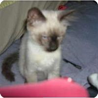 Adopt A Pet :: Thomas O'Malley - Lake Charles, LA