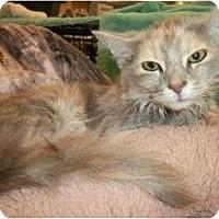Adopt A Pet :: Alley - Reston, VA